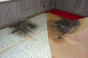 قارچ و کپک فرش