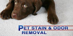 پاک کردن ادرار حیوانات از فرش ماشینی