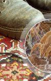 تصویر میکروسکوپی مایتهای گردوغبار موجود در فرش